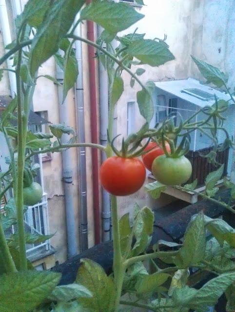 Roof URBAN gardening po holešovicku