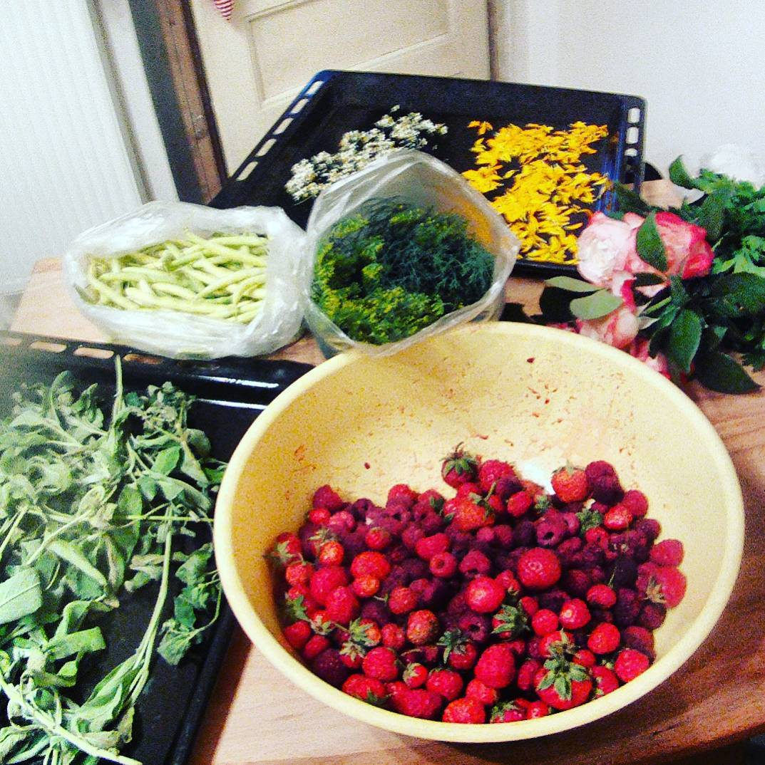 Fotka od Ferdika. 178/366: Harvest time. Delivered by @Verunkavalent straight from #Koberice. #strawberries, #raspberries, #roses, #greenbeans, #camomile, #salvia